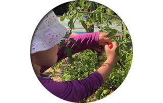 Projekt Hochbeet - Erntezeit